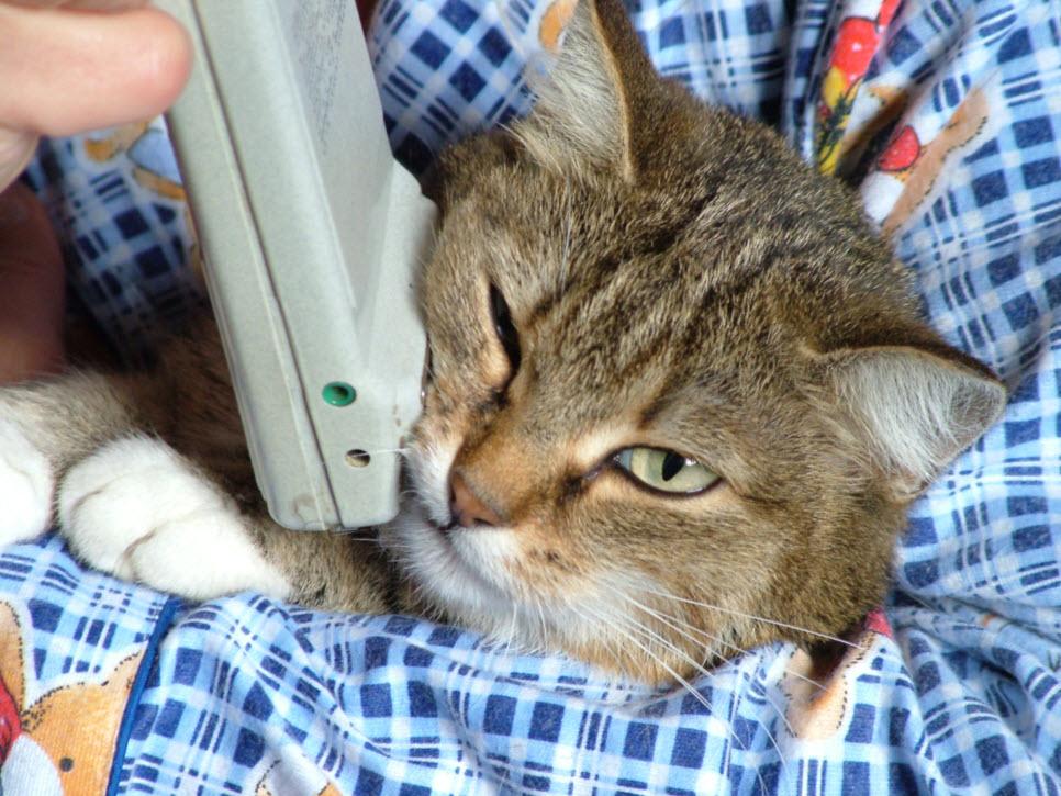 cat and scenar